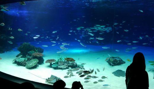 池袋サンシャイン水族館2歳子連れレポ&年間パスポート特典まとめ